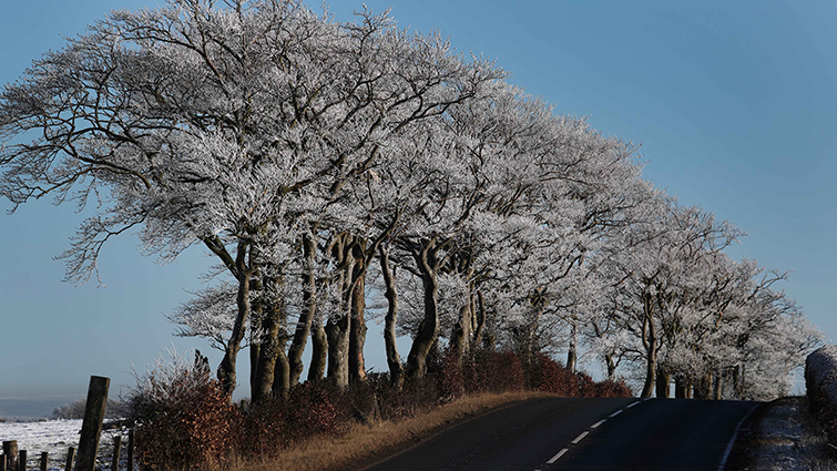 Photo of a South Lanarkshire road in winter with trees lining the side and the road having been gritted