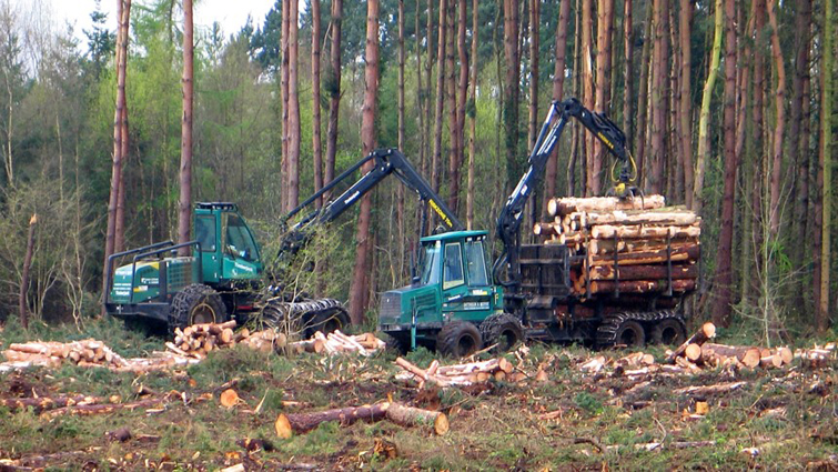 Forestry vehicles removing trees